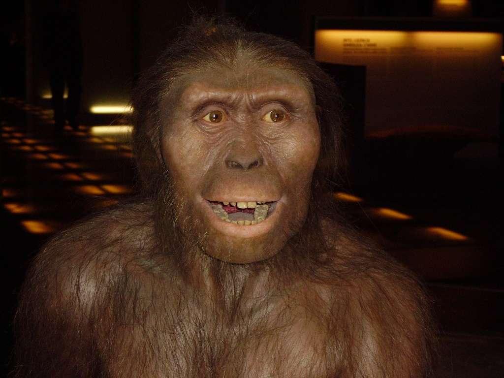 Australopithecus Afarensis MEH